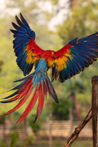 1125x2436 Macaw Flight Feathers