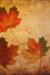 640x1136 Maple Leaves Texture Background