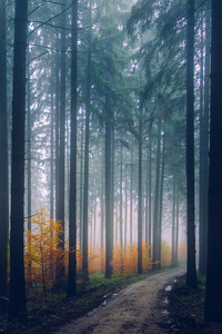 Mist Fog Trees Path Forest
