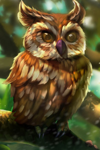 480x800 Owl Colorful Art