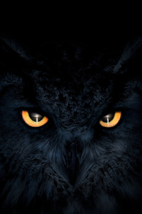1125x2436 Owl Dark Glowing Eyes