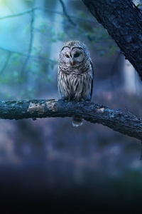 320x568 Owl Nature Forest
