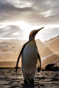 540x960 Penguin Looking Out 5k