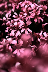 320x568 Pink Flowers Ultra Hd Blur 4k