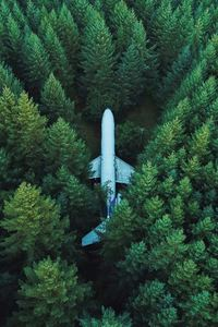 1440x2960 Plane In Middle Of Forest 4k