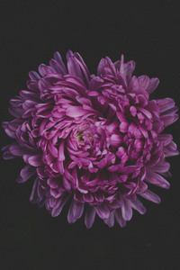 1440x2960 Purple Flower Blossom 5k