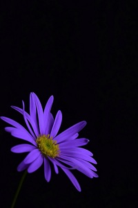 240x320 Purple Flower Blossom