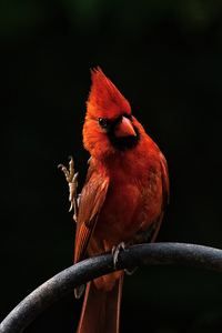 2160x3840 Red Bird Feathers
