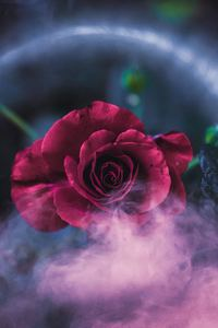 1125x2436 Rose Dreamy 4k