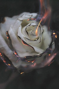 1440x2960 Rose Fire Photography Smoke