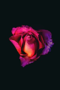 1125x2436 Rose Oled Dark 8k