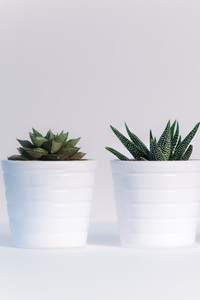 240x320 Small Plants In White Pots