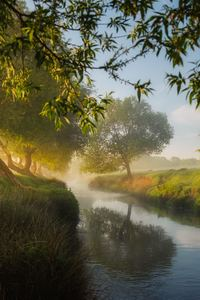 480x800 Small River Trees Dreamy