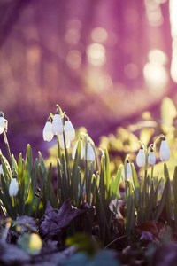 Snow Drops On Flowers