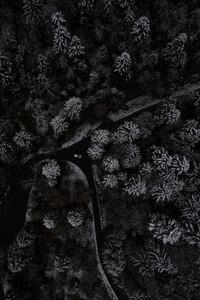 Snow Trees Top View From Drone 4k