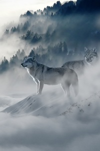 Wolf 1080x1920 Resolution Wallpapers Iphone 76s6 Plus Pixel Xl