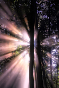 Sunbeam In Forest