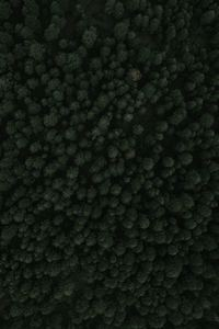 Top View Of Forest Green Trees 4k