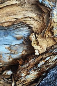 480x800 Tree Bark Pattern