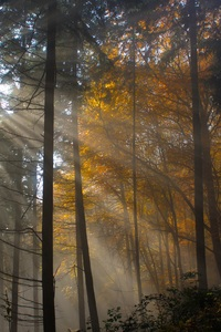 1440x2960 Tree Nature Wood Sun Fog Leaf Dawn Light
