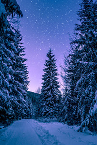 800x1280 Trees Covered With Snow Freezing Forest Winter 5k