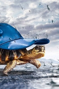 1280x2120 Turtle With Cap Raining