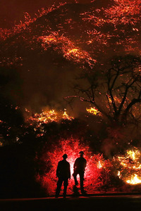 240x320 Two Man Standing In Front Of Forest Fire
