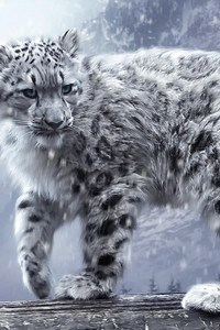 320x480 White Leopard Hd