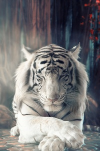 1080x1920 White Tiger Dreamy