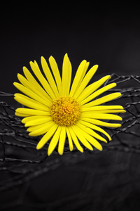1440x2960 Yellow Flower Fence Dark Black Background